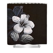 B And W Hibiscus Shower Curtain