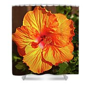 B Glavin Garden 11604 Shower Curtain