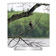 Kejimkujik National Park - Bird Shower Curtain
