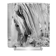 B/w Mustang Shower Curtain
