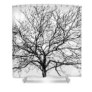 B/w Tree #1 Shower Curtain