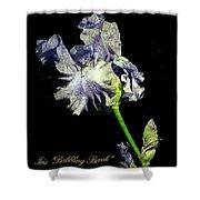 Babbling Brook Iris  Shower Curtain