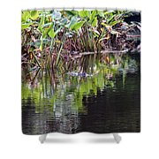 Babcock Wilderness Ranch - Alligator Den Shower Curtain