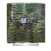 Babcock Wilderness Ranch - Alligator Lake - Heads Up Shower Curtain