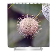 Babcock Wilderness Ranch - Buttonbush Shower Curtain