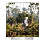 Babcock Wilderness Ranch - Gliding Great Egret Shower Curtain