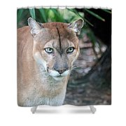 Babcock Wilderness Ranch - Oceola The Panther Gazing Shower Curtain