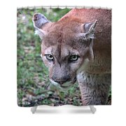 Babcock Wilderness Ranch - Oceola The Panther On The Prowl Shower Curtain
