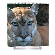 Babcock Wilderness Ranch - Oceola The Panther Pleasantly Peering Shower Curtain