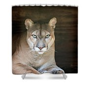 Babcock Wilderness Ranch - Portrait Of Oceola The Panther Shower Curtain