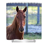 Babcock Wilderness Ranch - Red Horse Portait Shower Curtain