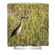 Babcock Wilderness Ranch - Sandhill Crane Shower Curtain
