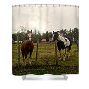 Babe And Brandy Shower Curtain
