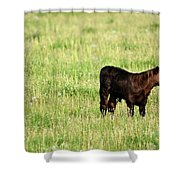 Babe In Dandelions Shower Curtain