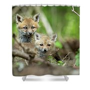 Babes In The Woods Shower Curtain