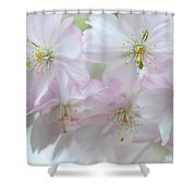 Babies Of Spring Shower Curtain