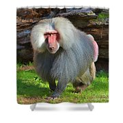 Baboon Stalking Shower Curtain