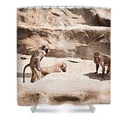Baboons Monkeys Having Sex Shower Curtain