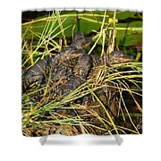 Baby Alligators Shower Curtain