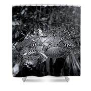 Baby Alligators On Board Shower Curtain
