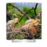 Baby Anhinga Chicks Shower Curtain