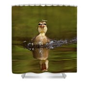 Baby Animal Series - Hunting Duckling Shower Curtain