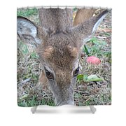 Baby Backyard Button Buck Shower Curtain