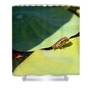 Baby Baja Tree Frog Emerges From Lotus Leaf Shower Curtain