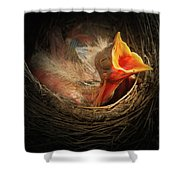 Baby Bird In The Nest With Mouth Open Shower Curtain