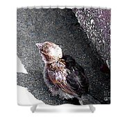 Baby Bird - Toyoung To Fly Shower Curtain