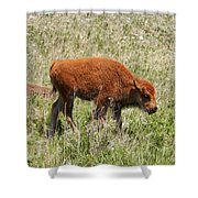 Baby Bison Shower Curtain