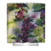 Baby Cabernet I  Triptych  Shower Curtain