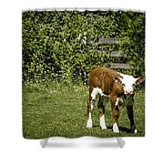 Baby Calf 2 Shower Curtain