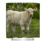 Baby Calf With Bluebonnets Shower Curtain