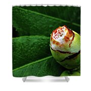 Baby Camellia Shower Curtain