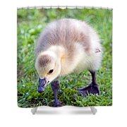 Baby Canada Goose Shower Curtain