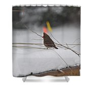 Baby Cardinal  Shower Curtain