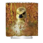 Baby Cuteness - Young Canada Goose Shower Curtain by Sue Harper
