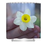 Baby Daffodil Shower Curtain