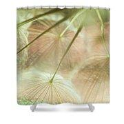 Baby Dandelion Shower Curtain
