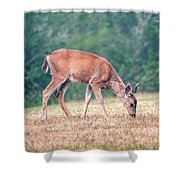 Baby Deer Walking On Grass By Forest Shower Curtain