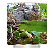 Baby Doves 1 Shower Curtain