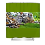 Baby Doves 2 Shower Curtain