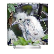 Baby Egret Shower Curtain