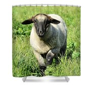 Baby Ewe Shower Curtain