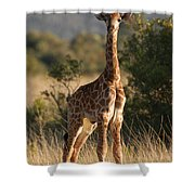 Baby Giraffe Shower Curtain