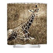 Baby Giraffe In Grasses Shower Curtain