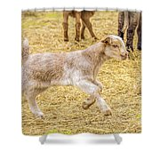 Baby Goat On The Run Shower Curtain