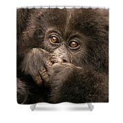Baby Gorilla Close-up Hiding Mouth With Hands Shower Curtain