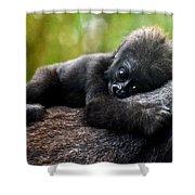 Baby Gorilla Shower Curtain